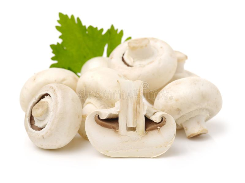 White mushrooms stock photography