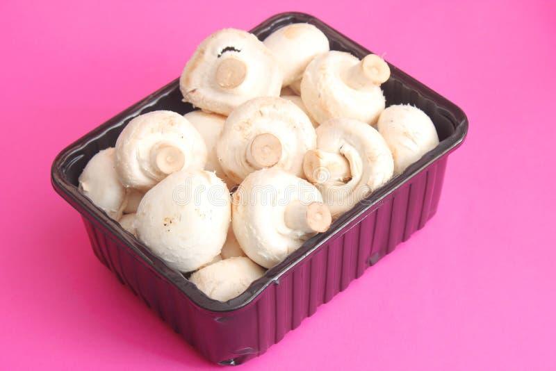 Download White Mushrooms stock photo. Image of champignon, mushrooms - 38748654