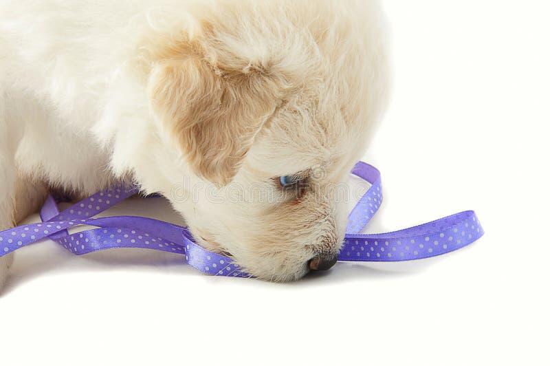 White muzzle puppy dog closeup stock photo