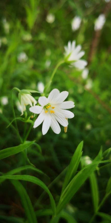 White'n green power. Whiten, flowee, flower, summer stock photos