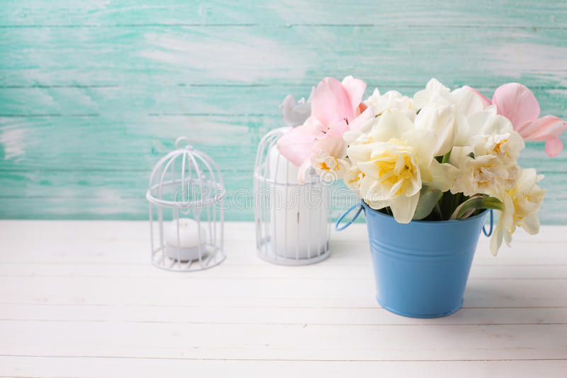 White narcissus and pink tulips in blue bucket on white paint. White narcissus and pink tulips in blue bucket and candles on white painted wooden background royalty free stock photo