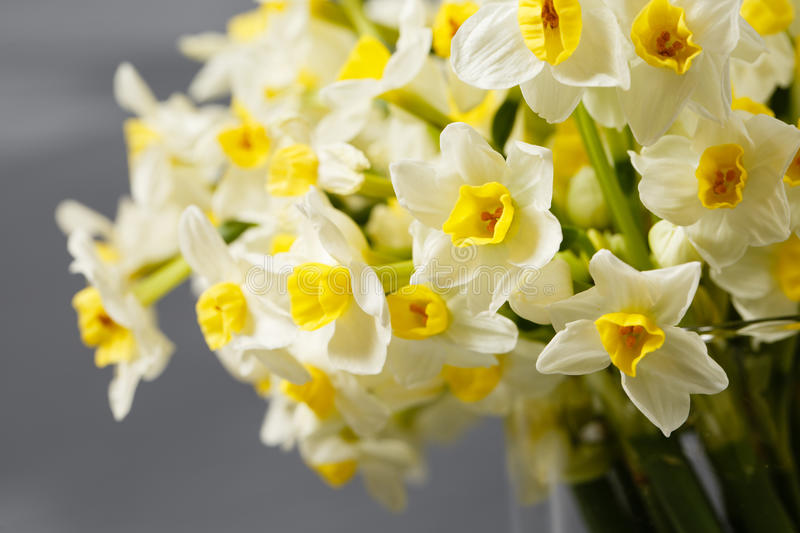 White narcissus. Spring Flower on retro table. Stylish office. Place for entries. Place for the inscription. Bouquet. Flowers in a vase stock image