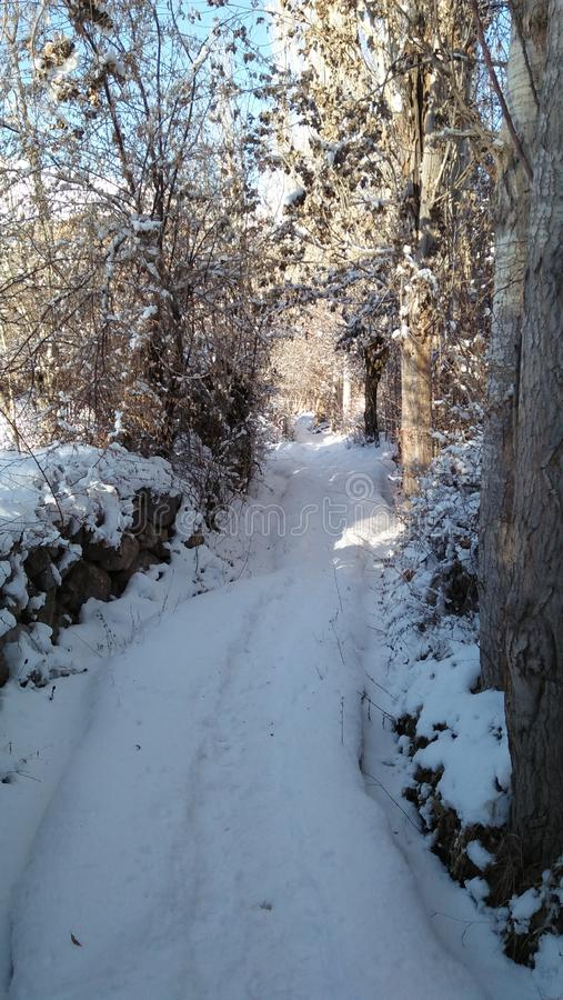 The white narrow way. This the narrow white way directly goes to a danger forest which is become most danger when the forest entirely covered by snow the wild royalty free stock photo
