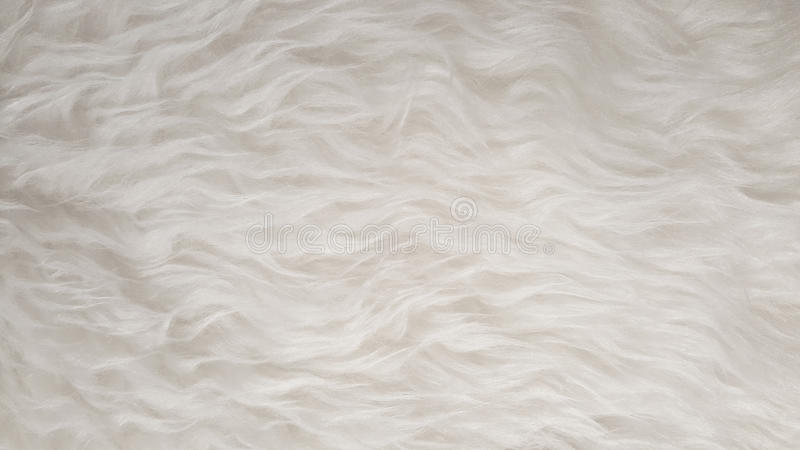 White Natural fluffy flat sheep pet skin texture backgrounds, material for carpet home decoration, leather textile industry. Manufacturing business stock photo