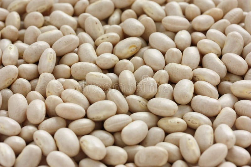White navy bean royalty free stock images