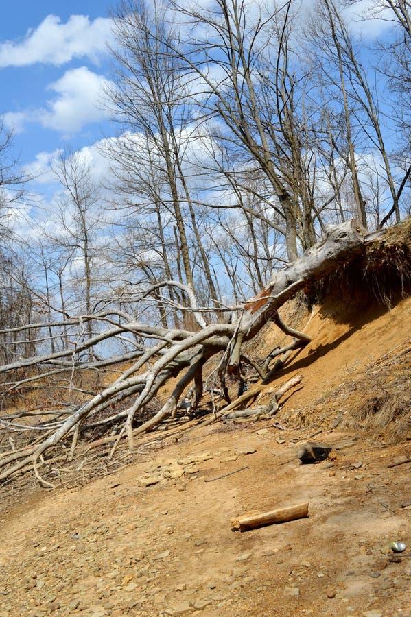Download White Oak Stake stock photo. Image of white, tree, broken - 32058046