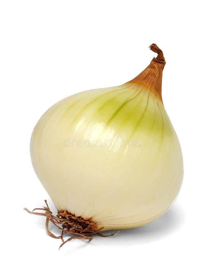 White onion. A white onion on a white bacground royalty free stock photography
