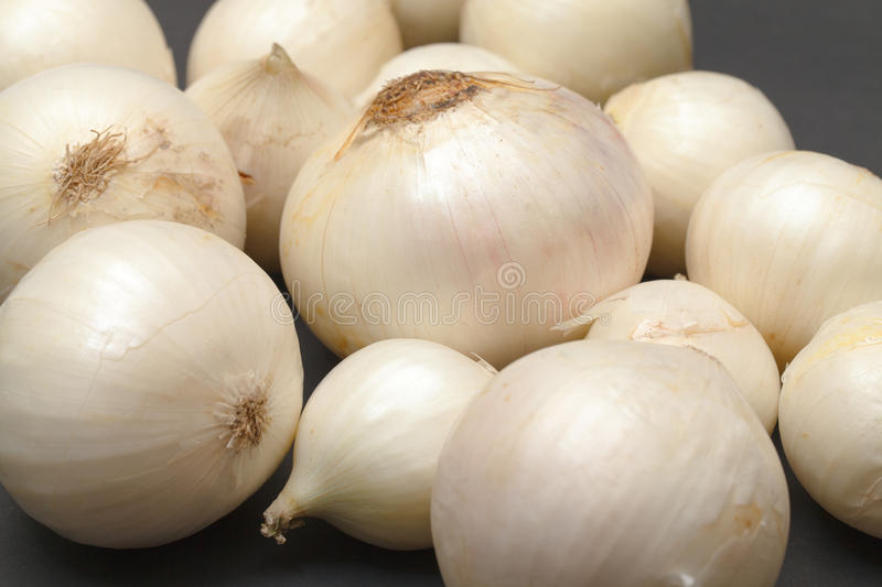 White Onion Bulb royalty free stock images