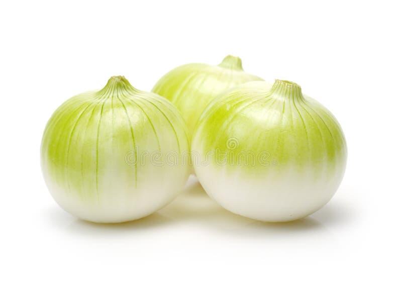 White onion royalty free stock image