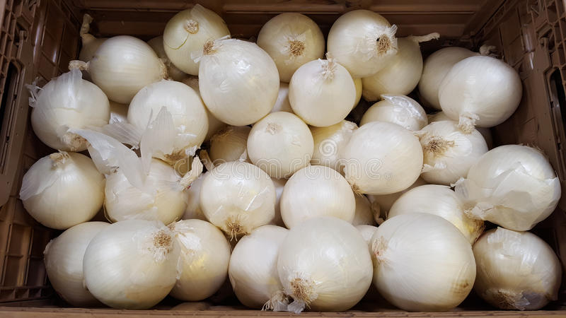 White Onion at the market royalty free stock image