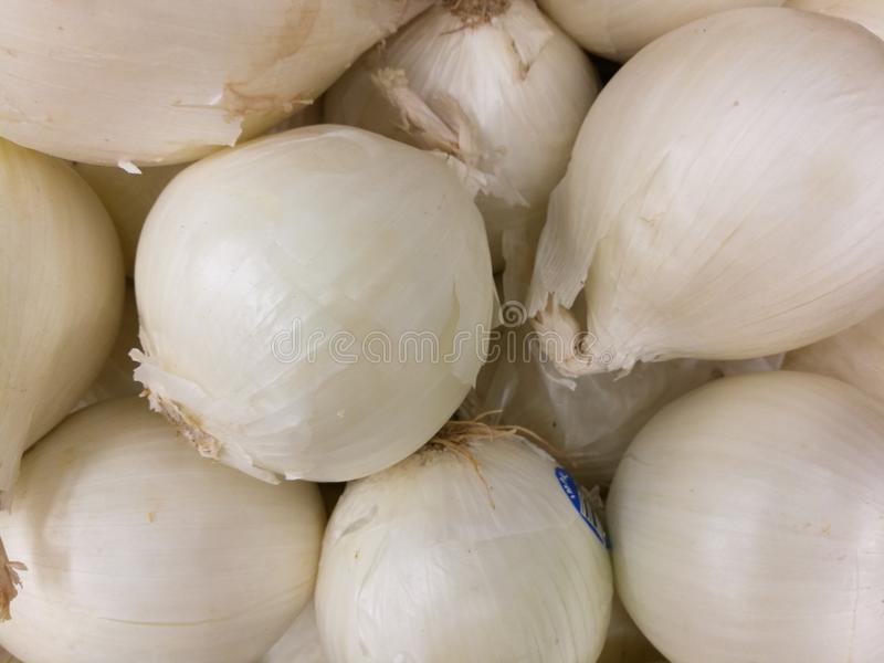 White onion stock images