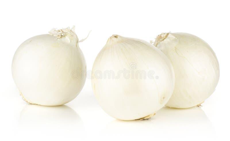 Fresh white onion isolated on white. White onion three shiny pearls isolated on white background royalty free stock photos