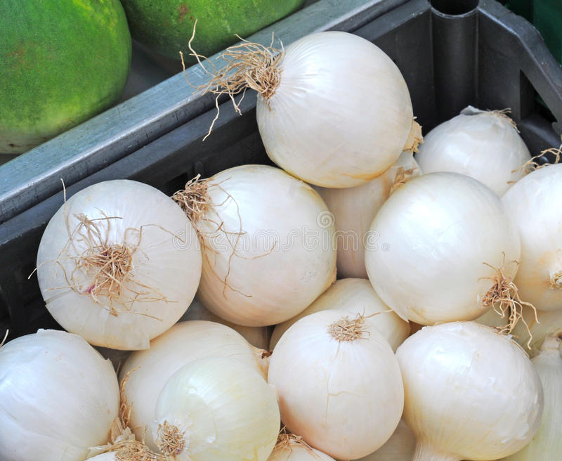 Download White onions stock image. Image of onions, legume, vegetable - 21732931
