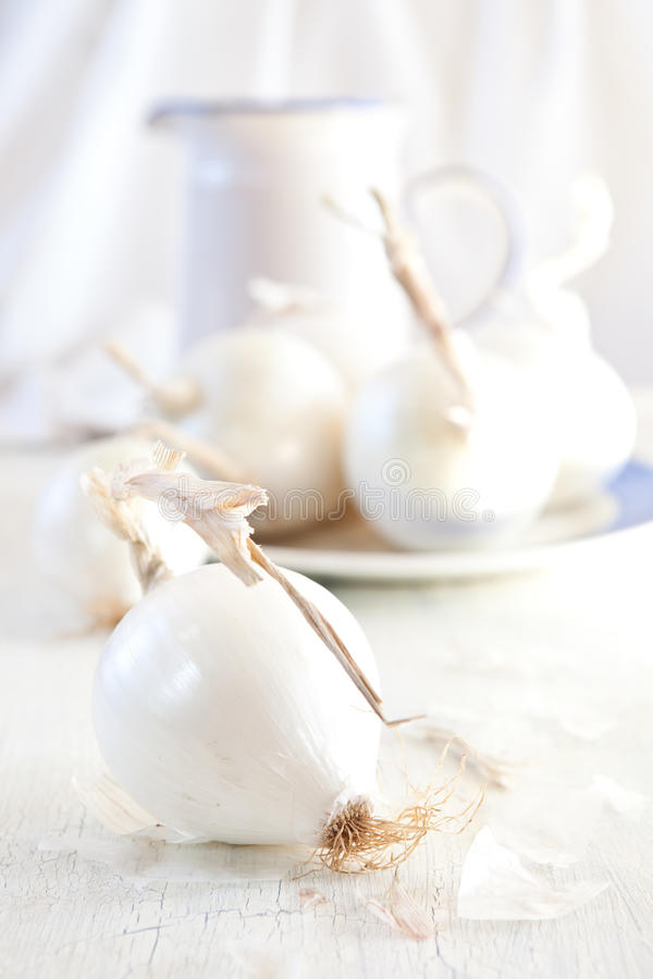 Download White onions stock image. Image of table, onions, nobody - 22403797