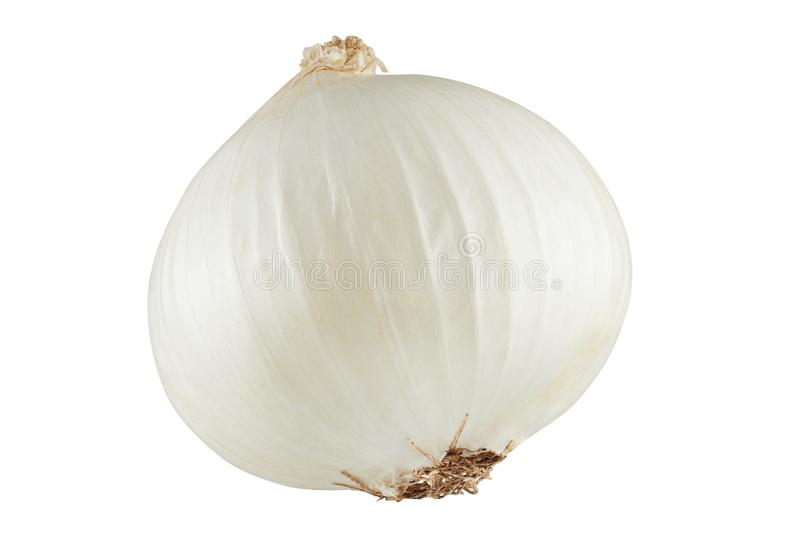 White onions isolated. Head of white onion stock images