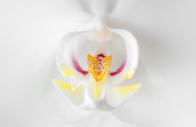Download White Orchid Stock Photo - Image: 6967120