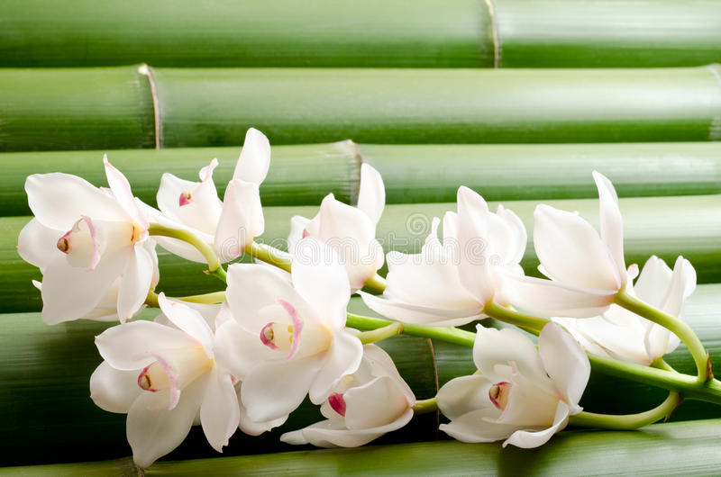 White orchid on bamboo royalty free stock photos