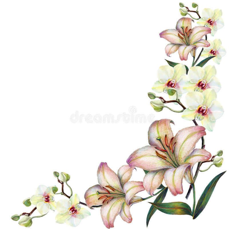 White orchid flower on a branch, lily,watercolor, bouquet, corner vector illustration