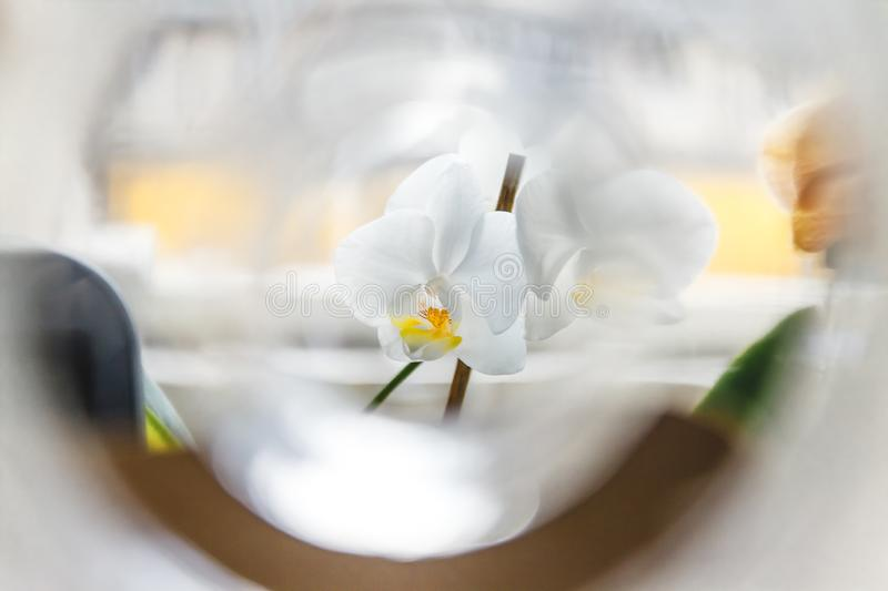 White orchid flower on a light background in creative blur.  stock photos