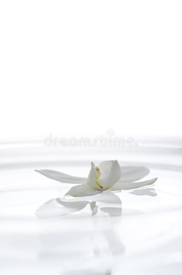 White Orchid Flower On The Water Royalty Free Stock Image
