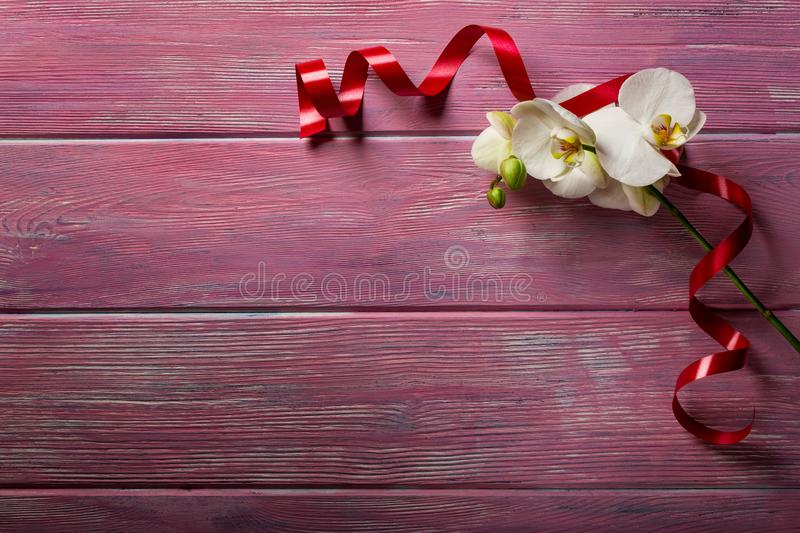 White Orchid on pink wooden background royalty free stock photography
