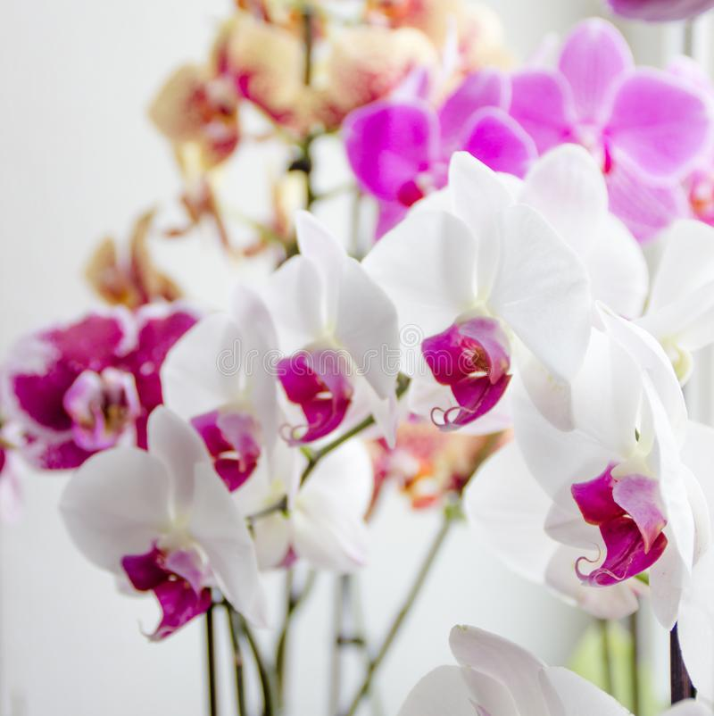 Orchid with colorful flowers stands on a window overlooking the city stock image