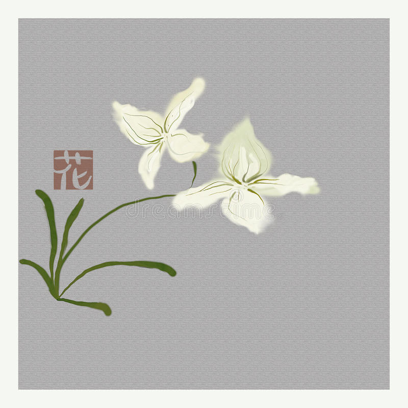 Free White Orchids Royalty Free Stock Photography - 13668827