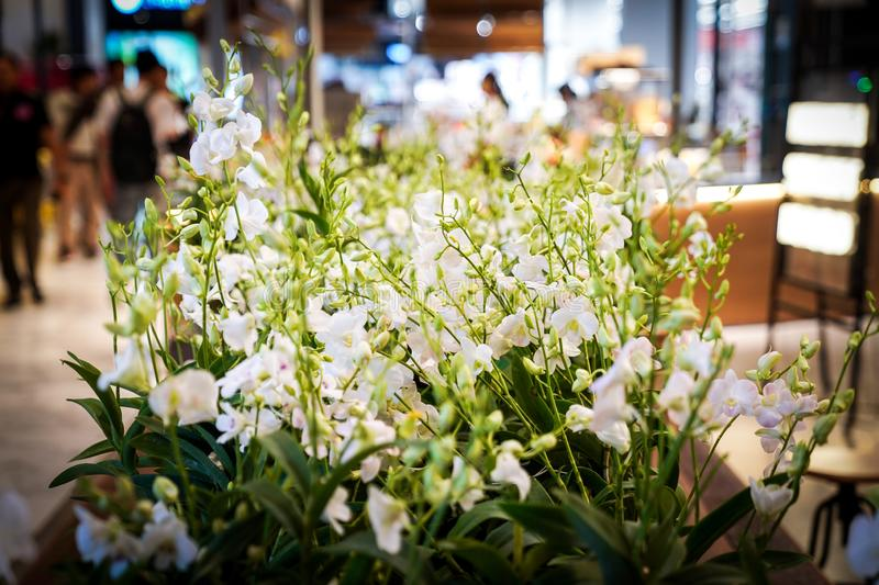 White orchids are decorating in some conner at department store., Bangkok, Thailand royalty free stock photo