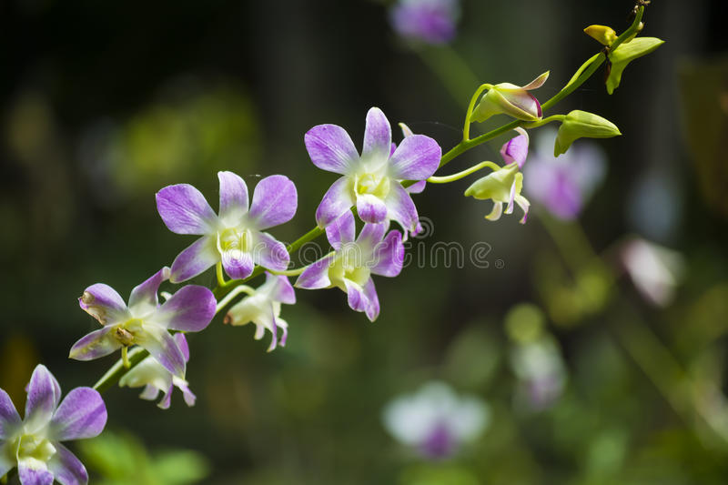 White orchids. Orchids flower at public park royalty free stock image