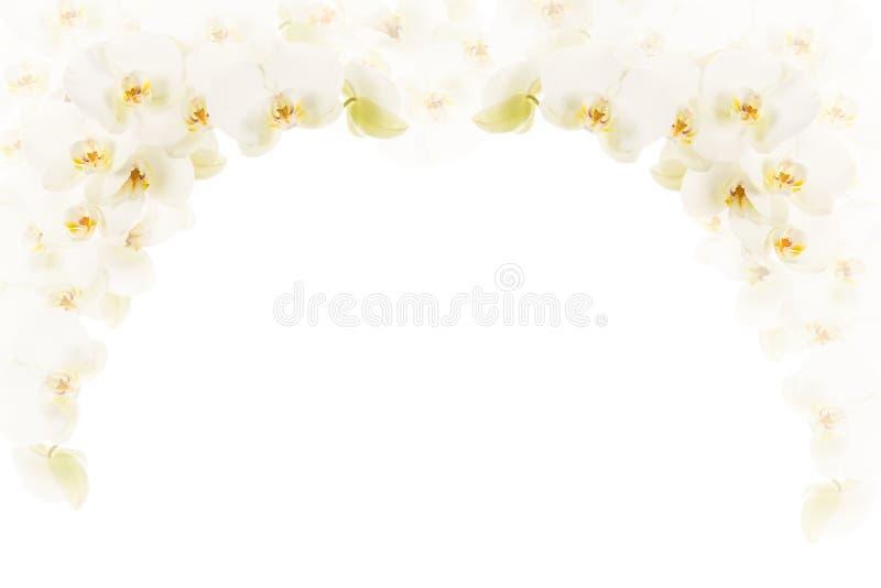 White orchids frame stock illustration. Illustration of blossom ...