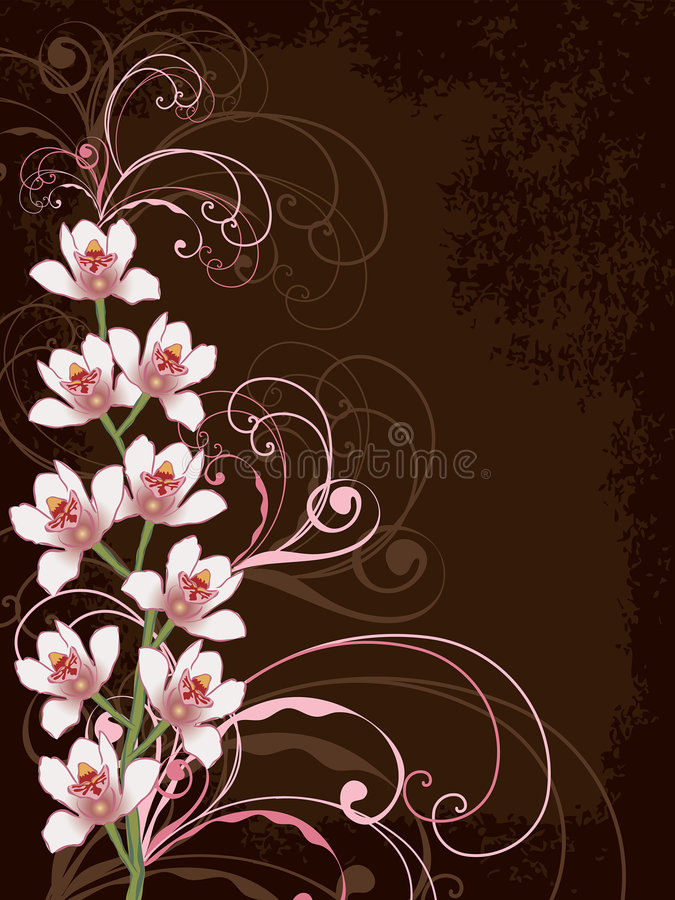 Download White Orchids With Pink Swirls Stock Vector - Image: 3681411