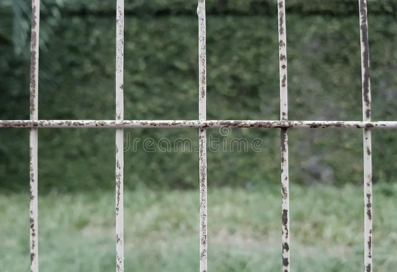 White painted steel security bars in a fence protecting a garden. Rusty, grungy metal fence bars stock photo