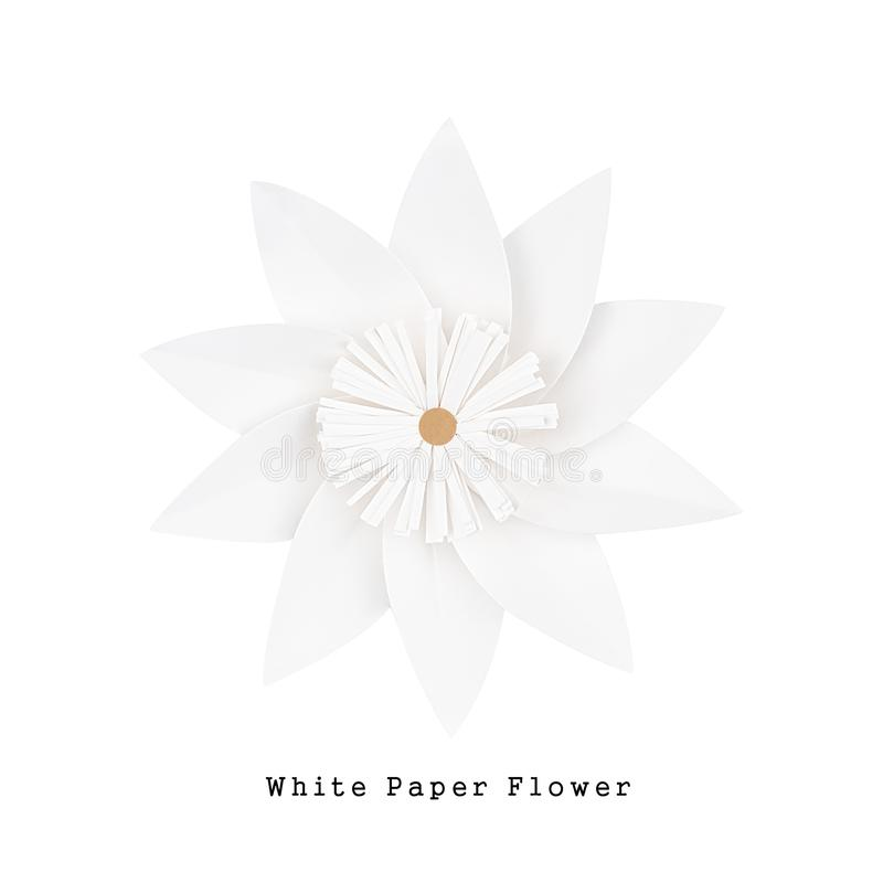 White paper flower, top view royalty free stock photography