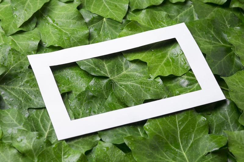 White paper frame with place for text on tropical background. Nature layout of leaves. White paper frame with place for text on tropical background. Nature stock images