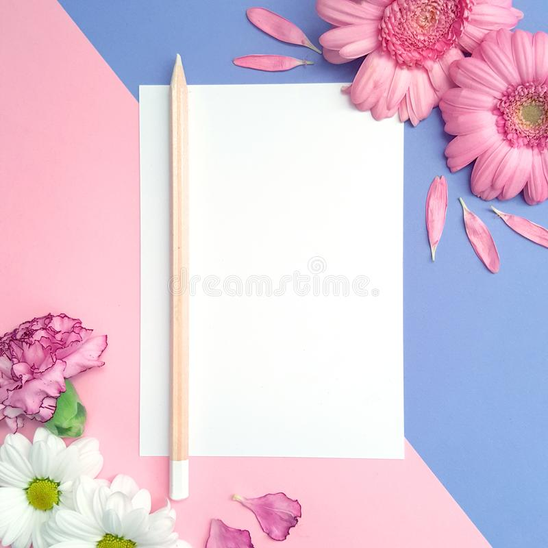 White Paper Note Card Mockup on Pink and Purple. White blank card on purple and pink color blocked background with pink and white flowers. Perfect for greeting royalty free stock image