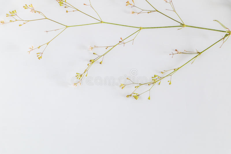 The white paper is placed on a wooden deck with flowers and leaves. stock image