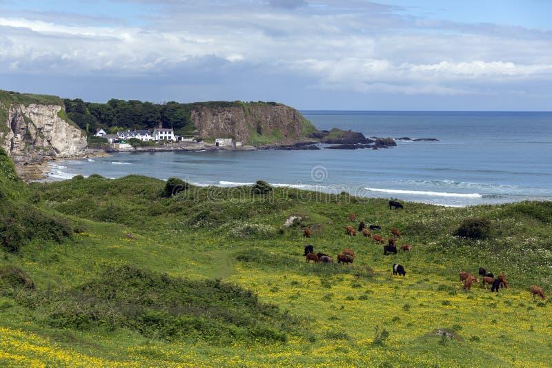 White Park Bay - Ballycastle - Northen Ireland royalty free stock image