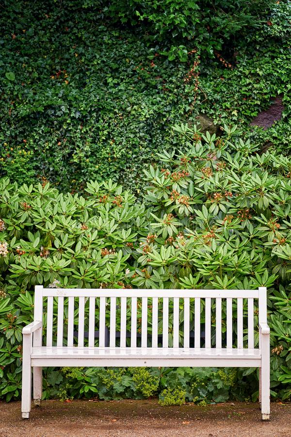 White park bench in front of green plants background stock photography