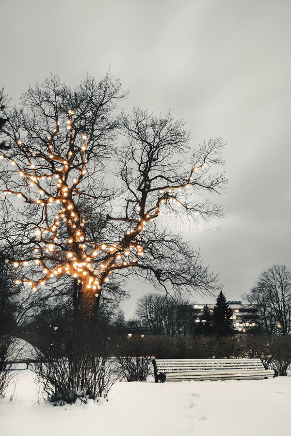 White park bench under illuminated tree in winter royalty free stock photos