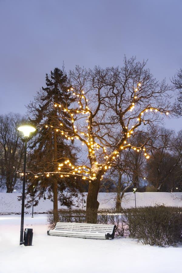 White park seat under illuminated tree in winter stock image