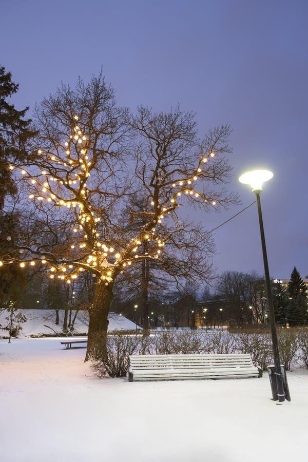 White park seat under illuminated tree in winter royalty free stock photos