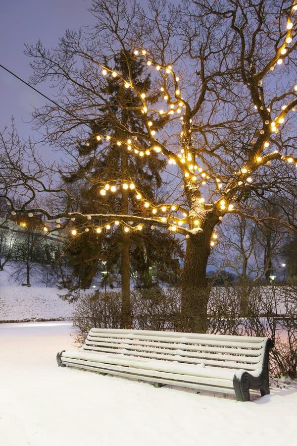 White park seat under illuminated tree in winter stock photography
