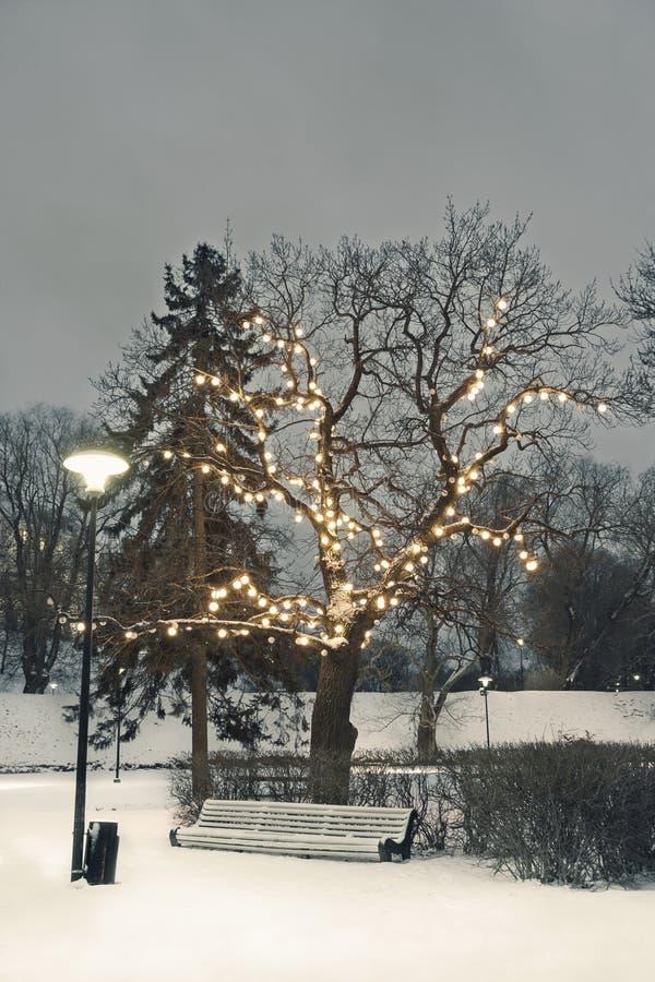 White park seat under illuminated tree in winter royalty free stock image