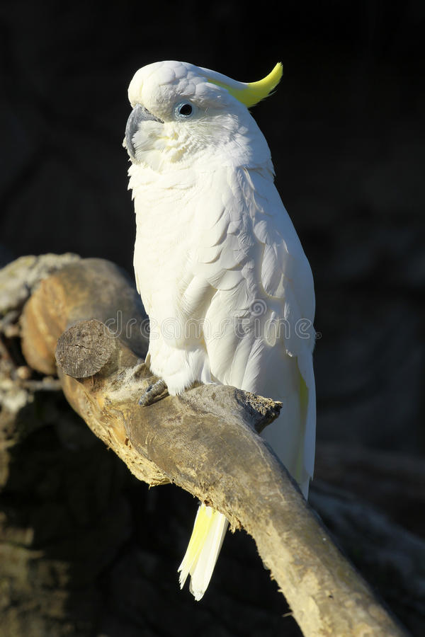 Download White parrot stock image. Image of macaw, looking, curious - 12129537