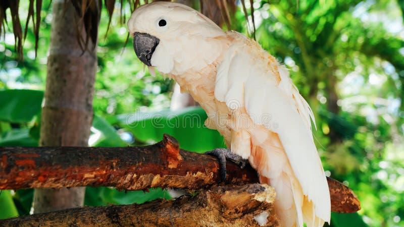 White parrot, cockatoo bird // beautiful white parrot ara 2018.  stock photos