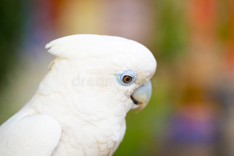 Download White Parrot stock image. Image of nature, view, bird - 36982357