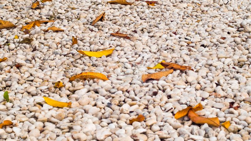 White pebbles stone texture and dry leaves on ground .nature Zen idea concept background royalty free stock photography