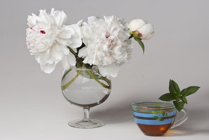Download White peonies stock image. Image of peonies, chrysanthemums - 20291659