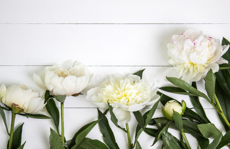 White peonies flower on white rustic wooden background with blank space for text. Mockup, top view stock photos