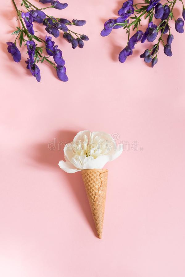 White peony flower in waffle cone and ultra violet aconitum on pink background. Summer concept. royalty free stock photography